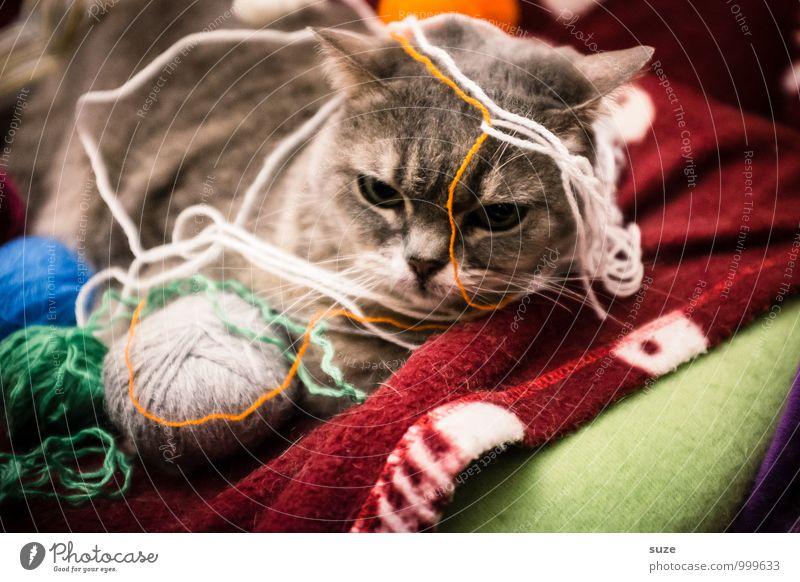 Ziemlich verstrickte Situation Katze Freude Tier Spielen Stimmung Freizeit & Hobby Zufriedenheit niedlich Pause tierisch Haustier Vorfreude Langeweile Decke Nähgarn kuschlig