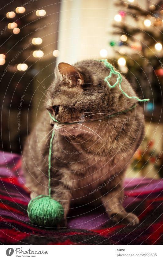 Oh, Faden verloren ... Katze Weihnachten & Advent Freude Tier Spielen Feste & Feiern Stimmung Freizeit & Hobby Zufriedenheit niedlich tierisch Weihnachtsbaum Haustier Decke Vorfreude festlich