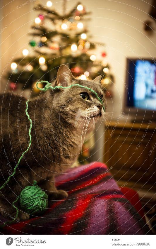 Strickliesl Katze Weihnachten & Advent Freude Tier Spielen Feste & Feiern Stimmung Freizeit & Hobby Häusliches Leben Zufriedenheit niedlich Fernseher