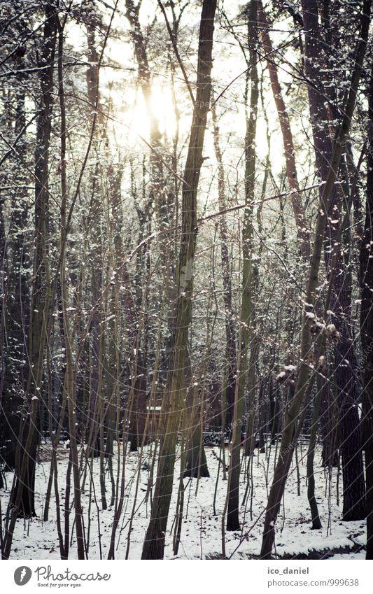 Winterwald III Umwelt Natur Pflanze Schönes Wetter Eis Frost Schnee Schneefall Baum Wald Romantik schön ruhig Stil Gedeckte Farben Außenaufnahme Menschenleer