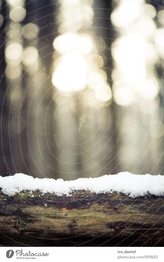 Winterwald II Umwelt Natur Pflanze Sonnenlicht Schönes Wetter Eis Frost Schnee Schneefall Baum Wald leuchten kalt Zufriedenheit Gedeckte Farben Außenaufnahme