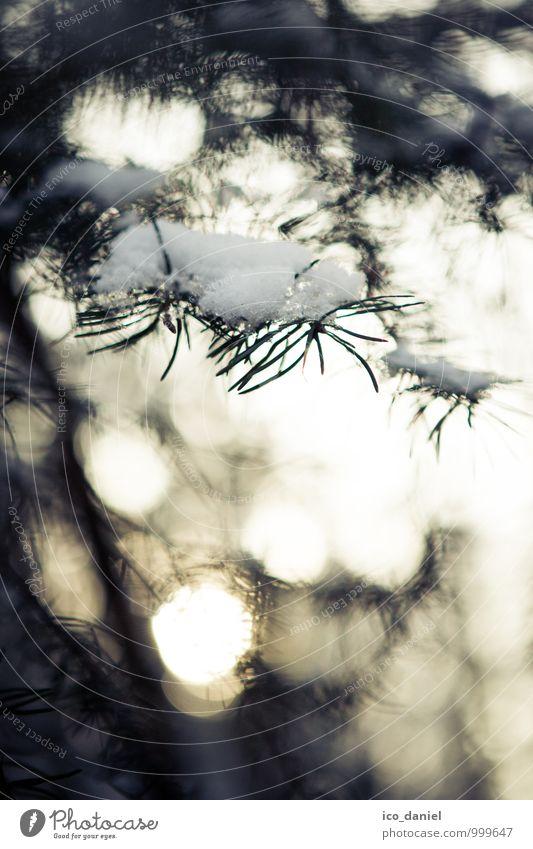 Tannenbaum Umwelt Natur Pflanze Winter Schönes Wetter Schnee Schneefall Wald ästhetisch hell schön Tannenzweig Farbfoto Gedeckte Farben mehrfarbig abstrakt