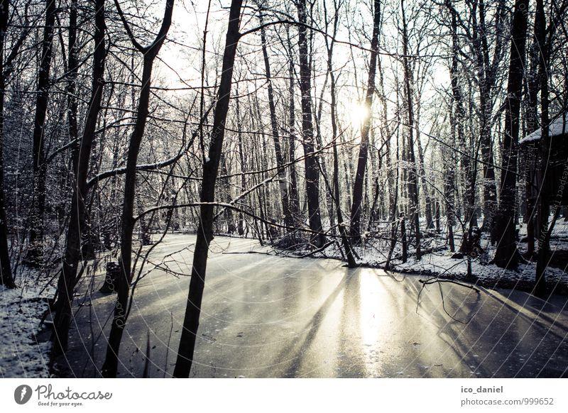 Winterwald I Ferien & Urlaub & Reisen Abenteuer Freiheit Schnee Winterurlaub Umwelt Natur Landschaft Pflanze Wasser Sonnenlicht Eis Frost Schneefall beobachten
