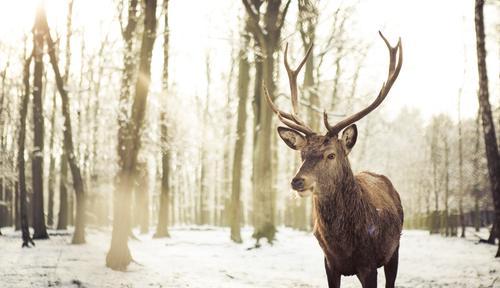 Winterromantik Natur Pflanze Sonne Landschaft Tier Umwelt Gefühle Schnee Glück Zufriedenheit Schneefall Eis Wildtier Romantik Frost