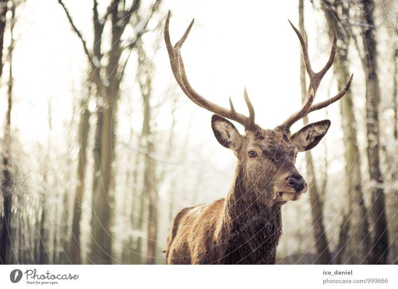 Waidmannsheil I Natur Ferien & Urlaub & Reisen Erholung Tier Winter Umwelt gelb Schnee Schneefall Wildtier gold authentisch ästhetisch Ausflug beobachten