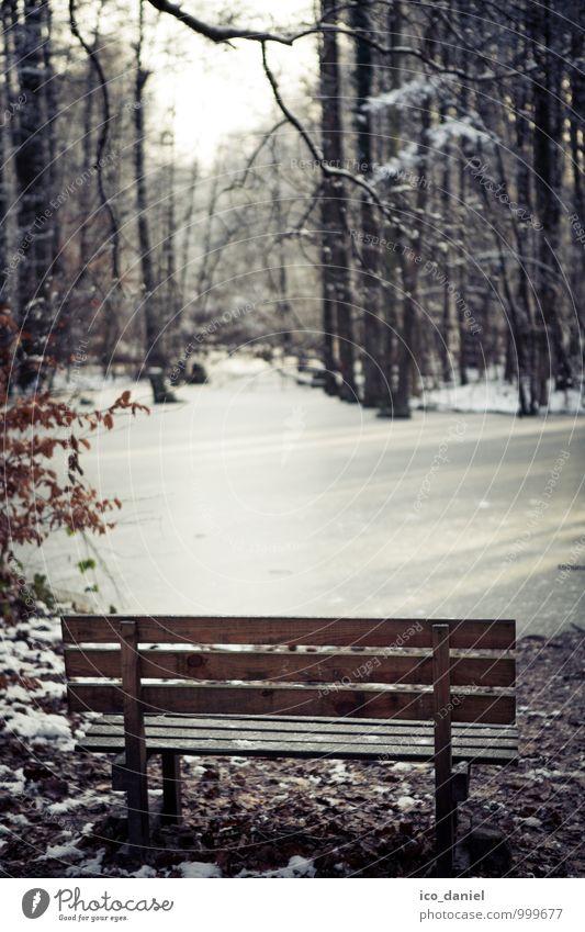 winterliche Ruhe Natur Ferien & Urlaub & Reisen Erholung Landschaft Einsamkeit ruhig Winter Wald Traurigkeit Gefühle Glück Denken Freiheit Stimmung träumen Park