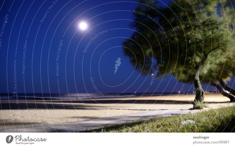 Nocturne Strand Baum Meer Küste Mond Wind Natur Sand Abend