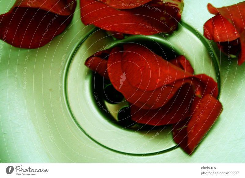 Vergangene Liebe rot Blume Trauer Rose Küche Bad Badewanne Vergangenheit Schmerz Verzweiflung Liebeskummer Abfluss Waschbecken Rosenblätter Rosenblüte rote Rose